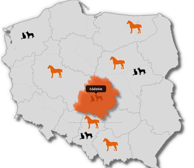 terapia irap w zgierzu,polska,kot,pies,small animals