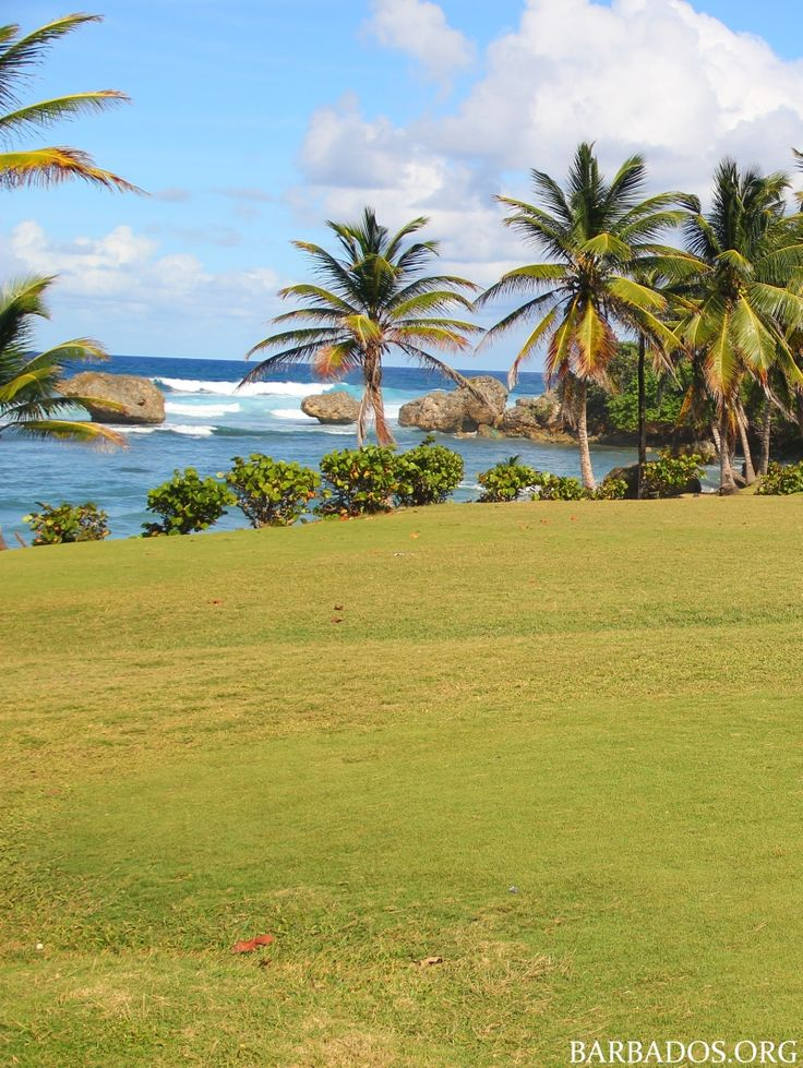 Spend a relaxing morning at Bathsheba Park on the east coast of Barbados. Watch the surfers, walk the beach, soak in the natural pools and savour a tasty local lunch and ice-cold beer!