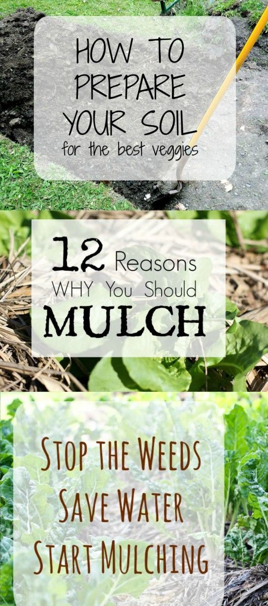 save water and stop the weeds by Mulching your Garden. The best way to add nutrients to your soil and get protect your plans.