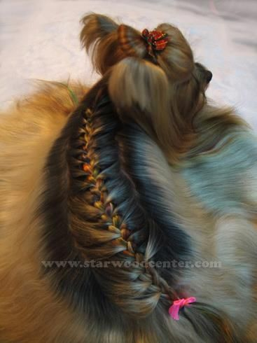 braid.. asian style grooming... love