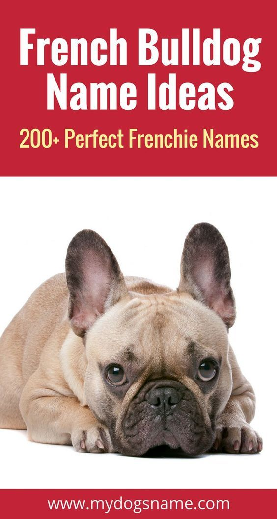 Sweet and stylish dog names perfect for a French Bulldog. Frenchie names don't get much better than this!