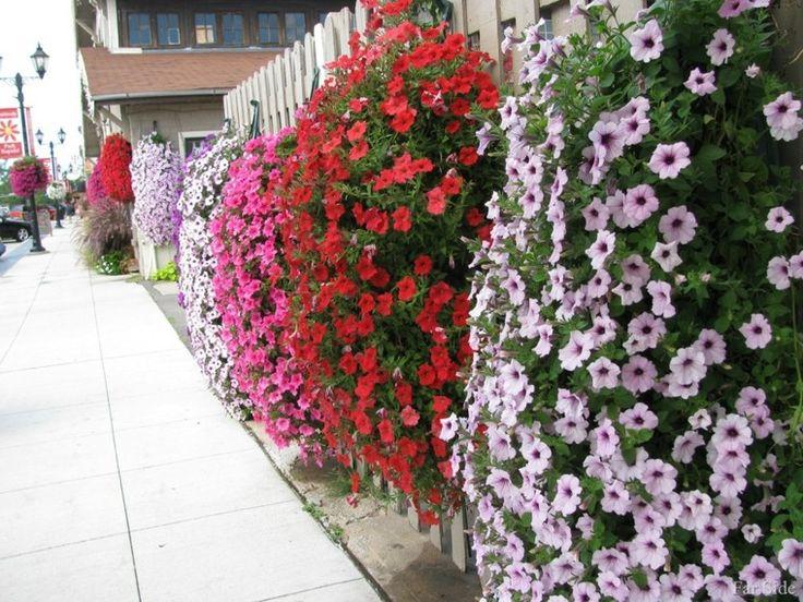 valla blanca con flores de distintos colores