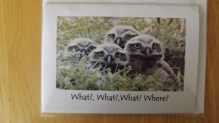 What? What? What? Where?. Owls. Blank Greetings Card by HeronCottageArtisan on Etsy