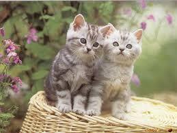 gattini piccoli - Cerca con Google