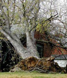 Tree fallen from storm.