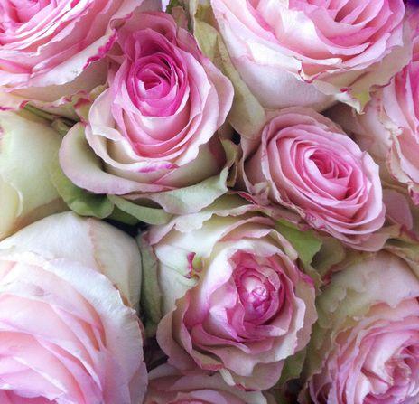 garden roses...