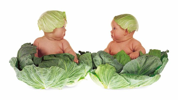 Anne Geddes Interview | Studio Baby Photography