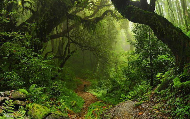 Las plantas son seres vivos que viven sujetos al suelo, por lo que no pueden desplazarse. Sin embargo, realizan todas las funciones propias de los seres vivos.  La mayoría de las plantas son verdes debido a que contienen una sustancia llamada clorofila (sustancia que permite a las plantas utilizar la energía de la luz para realizar la fotosíntesis).