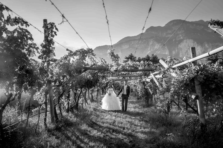 Matrimonio alle Cantine Endrizzi, wedding in italy  www.weddingintrentino.com , wedding in vineyard , matrimonio tra le vigne Trentino, Cantine Endrizzi more info see here below