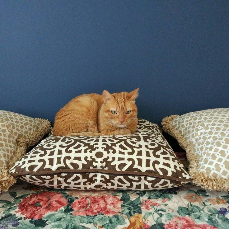 #коты - лучшие ценители уюта и красоты :) #Фото @ksdedfox #котики #подушки #котэ #pillows #decoration #дизайнинтерьера #galleria_arben #cat
