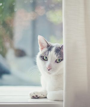 dark gray cat with blue eyes