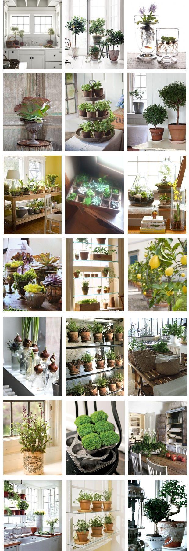 Potted Plants, Potted Plants Inside, Gardening Inside, Indoor Gardens, Primitive Decorating Ideas,