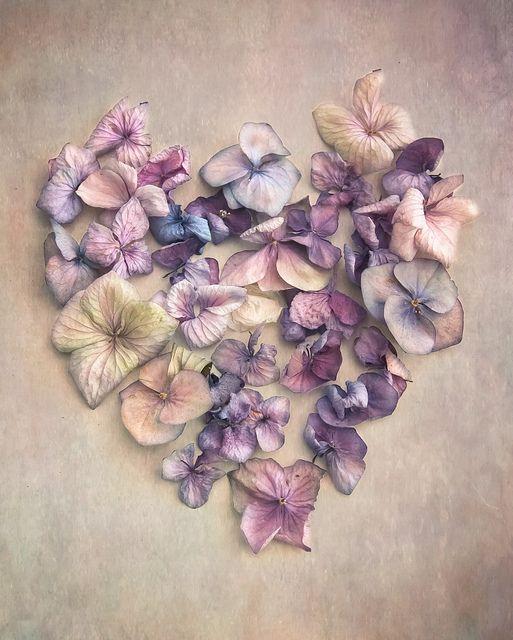 prettylittleflower:  heart hydrangea vintage by photoart33 on Flickr.