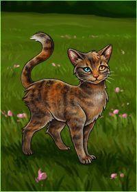 What Warrior Cat Am I Quiz Quotev