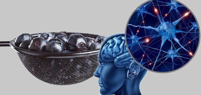 Όλοι γνωρίζουμε ότι ο εγκέφαλος των παιδιών αναπτύσσεται και διευρύνεται όσο τα παιδιά μαθαίνουν και μεγαλώνουν. Αντιθέτως, οι ενήλικες, όσο μεγαλώνουν, αρχίζουν σταδιακά να χάνουν εγκεφαλικά κύτταρα και εγκεφαλικό υλικό. Αυτό συμβαίνει διότι τα κύτταρα αρχίζουν να πεθαίνουν πριν κατορθώσει το σώμα να τα...