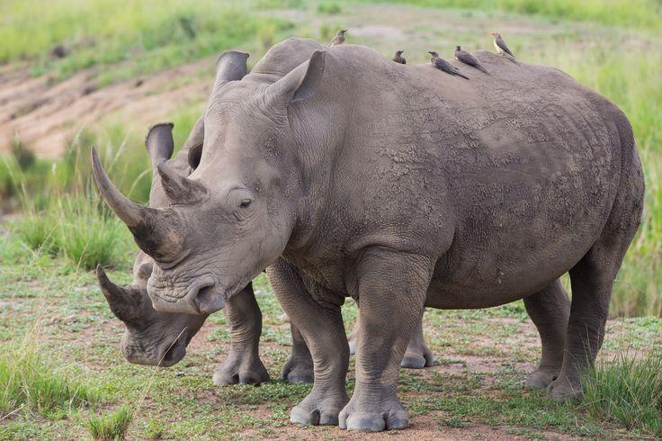 Safari time at Karkloof Safari Spa - your true timelessness destination spa in South Africa