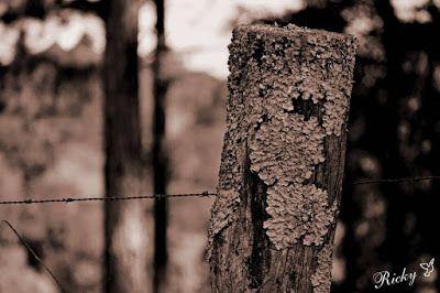 Atrapados por la imagen: El Poste y el Alambre de Púas