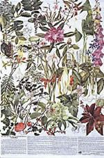 Poisonous plants poster