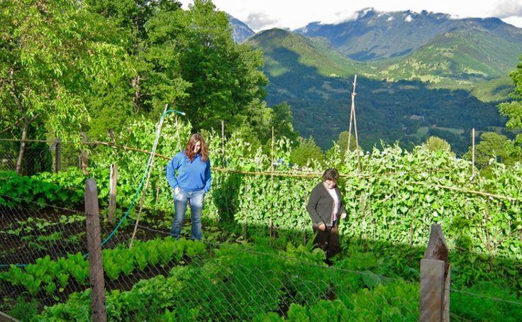 Talleres de cocina tradicional Mapuche en huertos locales con productos naturales.