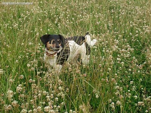 Jacky in het lange gras op het industrieterrein.
