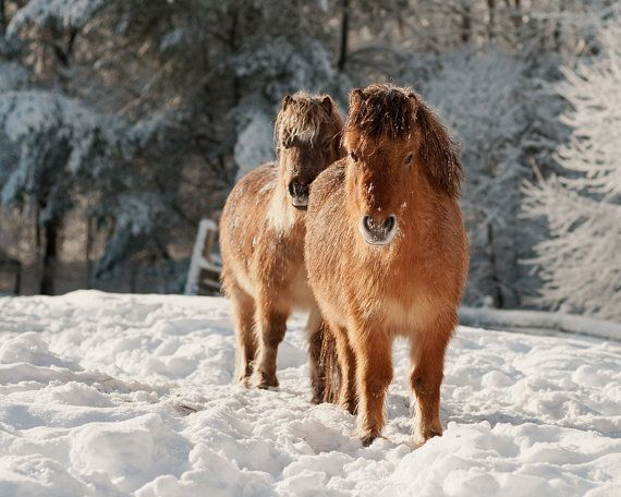 Horses in Snow Wintry Photo Horse by Whimsicalphotocards on Etsy, $18.00
