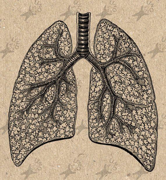 Anatomical Lungs Clip Art Design Transfer Digital File Instant Download DIY Gravure Vintage image  for t-shirt , bag ,  pillow cases, etc