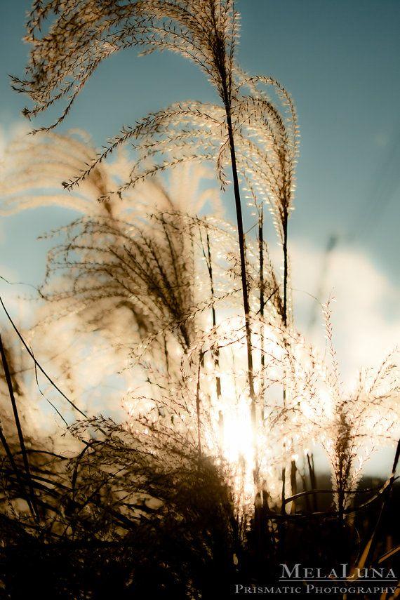 Soft and Light Floating on a Breeze ... Fine Art Photo by MelaLuna, $24.00
