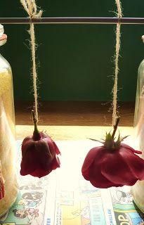 DE GULLE AARDE: rozen met was