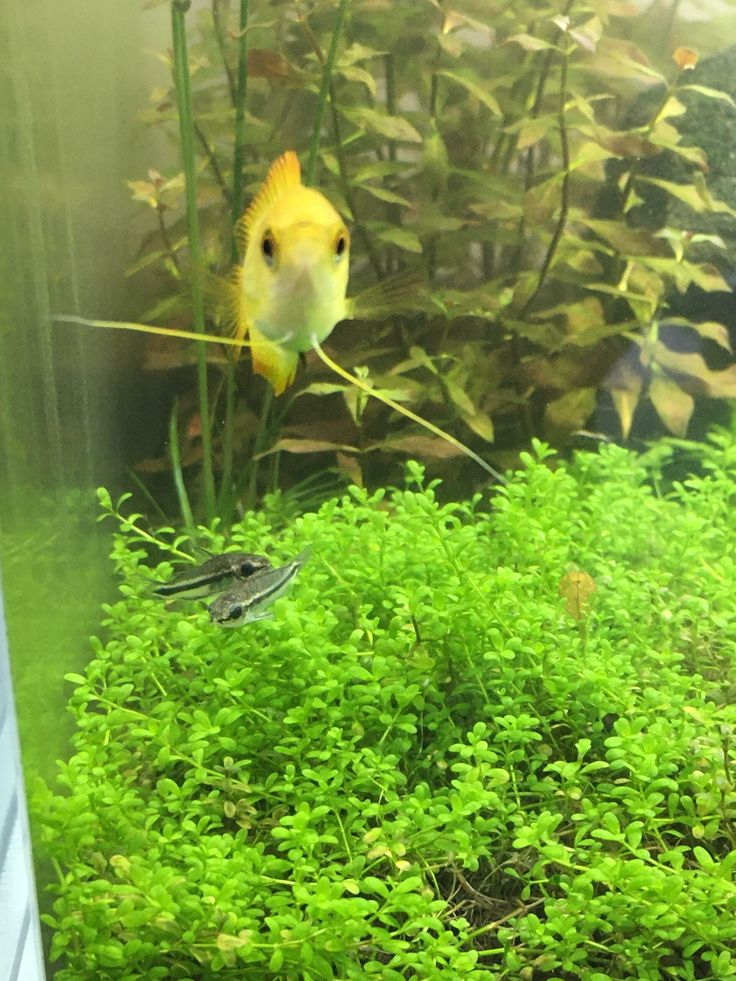 Aquariums Last Picture I Took Of Him Found Him Dead This Morning Https Www Flakefood Com 294117 Aquariums Last Picture I Took Of H In 2021 Picture Dead Aquarium