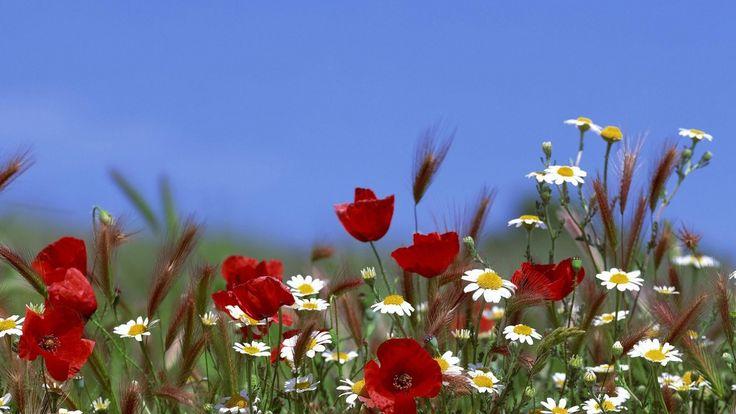 cielo, estate, campo, punte Sfondo di Apple sfondi 1920x1080 Sfondi gratis, immagini, foto, fondo, materiale