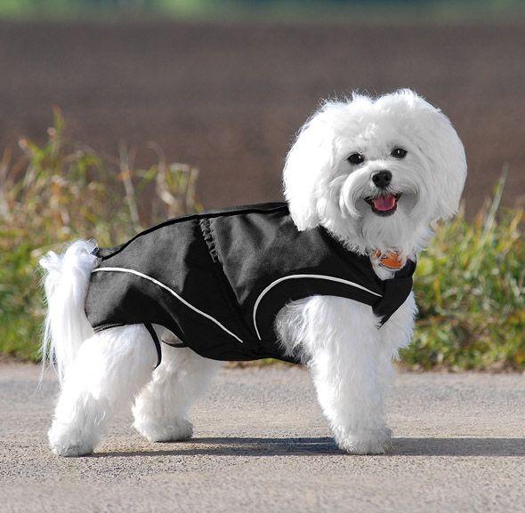wind und wasserdichte jacken für den winter bulldoggen französische