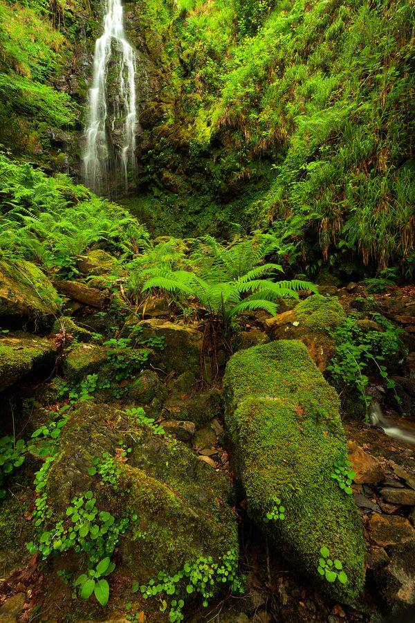 Spanish forest, Parque Natural de Gorbeia, Zigoitia, Álava, Spain
