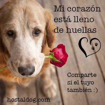frases de amor a los perros - mi corazon