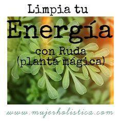 Hierba mágica para limpiar tus energías! La Ruda: no sólo nos protege y nos trae beneficios positivos y mágicos, sino que también se le conoce por su poder de alejar la negatividad, absorberla y transformarla en energía positiva. Aprende aquí a utilizarla para atraer cosas buenas hacia ti y limpiarte de energías negativas. #salud #dieta #energiapositiva #mujerholistica #energia #ruda #plantamagica #planta #casa #hogar #buenasvibras  #Nutrición y #Salud YG > nutricionysaludyg.com