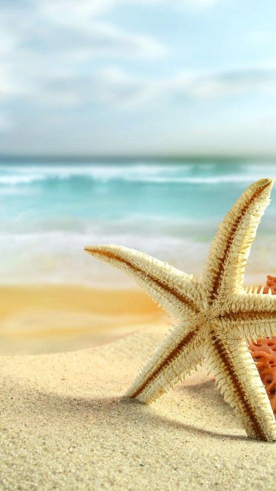 Blue Sky, Crystal Clear Water, White Sand, Sea Star = Life on the Beach ~ how Wonderful
