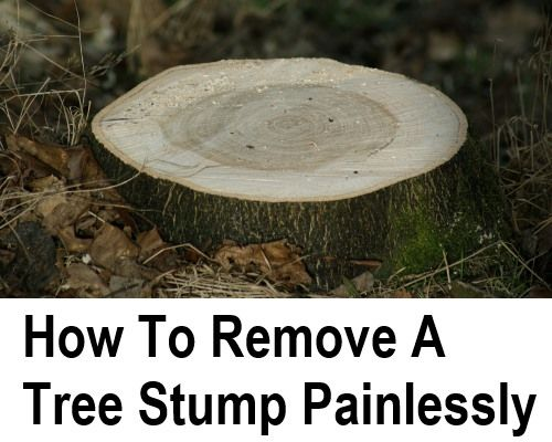 It's one thing cutting down a diseased tree or a tree that's for some reason in the way. It's another thing altogether to remove the tree stump! Even if you have never tried to remove a tree stump, I am sure you can imagine how difficult it is to do... If...