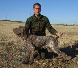 Club Español de Amigos del Perro Perdiguero de Burgos, perdiguero de burgos, perro de caza perdiguero de burgos, Óscar Vidueiros, Criadero Vidueiros,