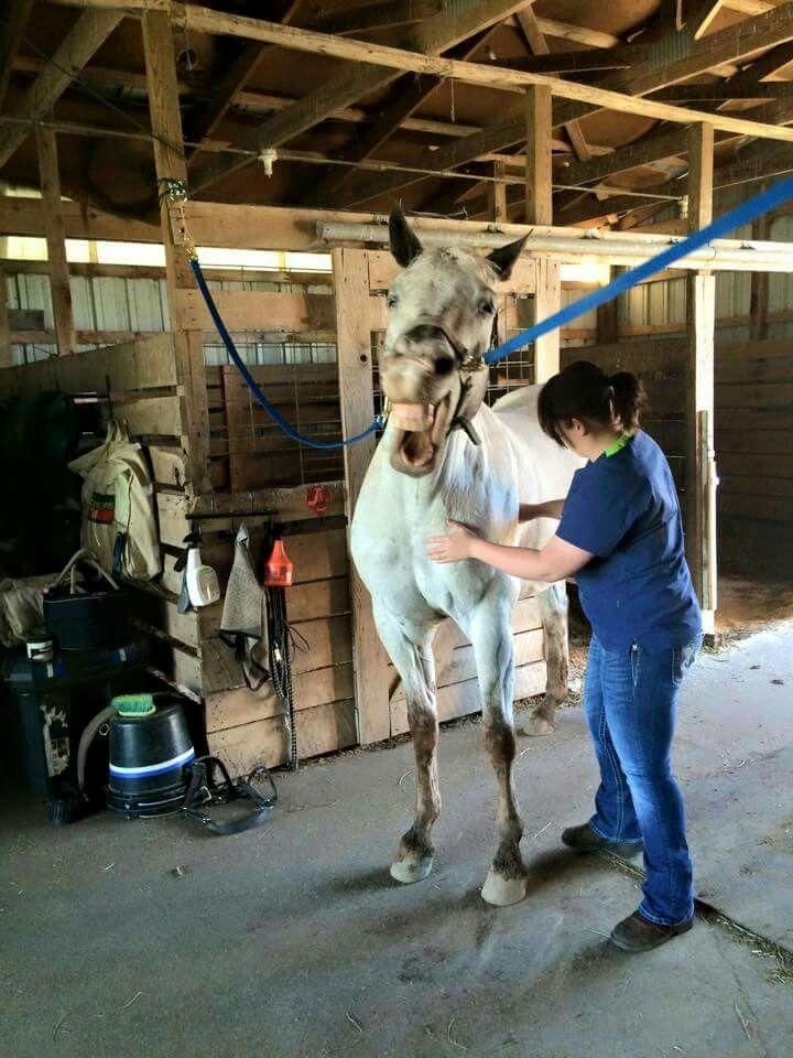 Best Horse Massage Images On   Animal Anatomy