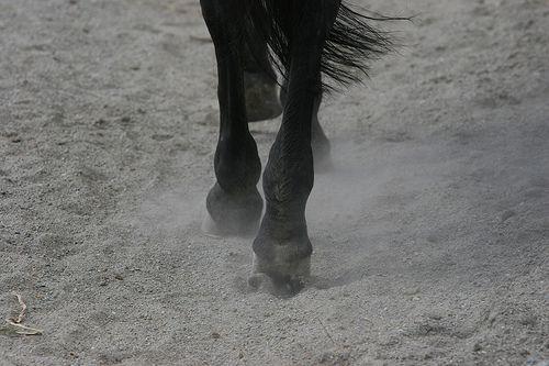 #horse clogs. #horseriding #OasiZegna #Italy www.oasizegna.com