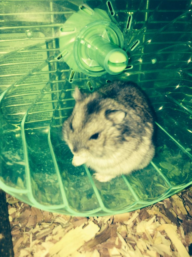This is my hamster pepper, lol it looks like she is praying! Xx<<<aww!!!