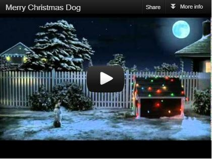Outdoors Dog Christmas.  This is for all dog lovers....So cute!