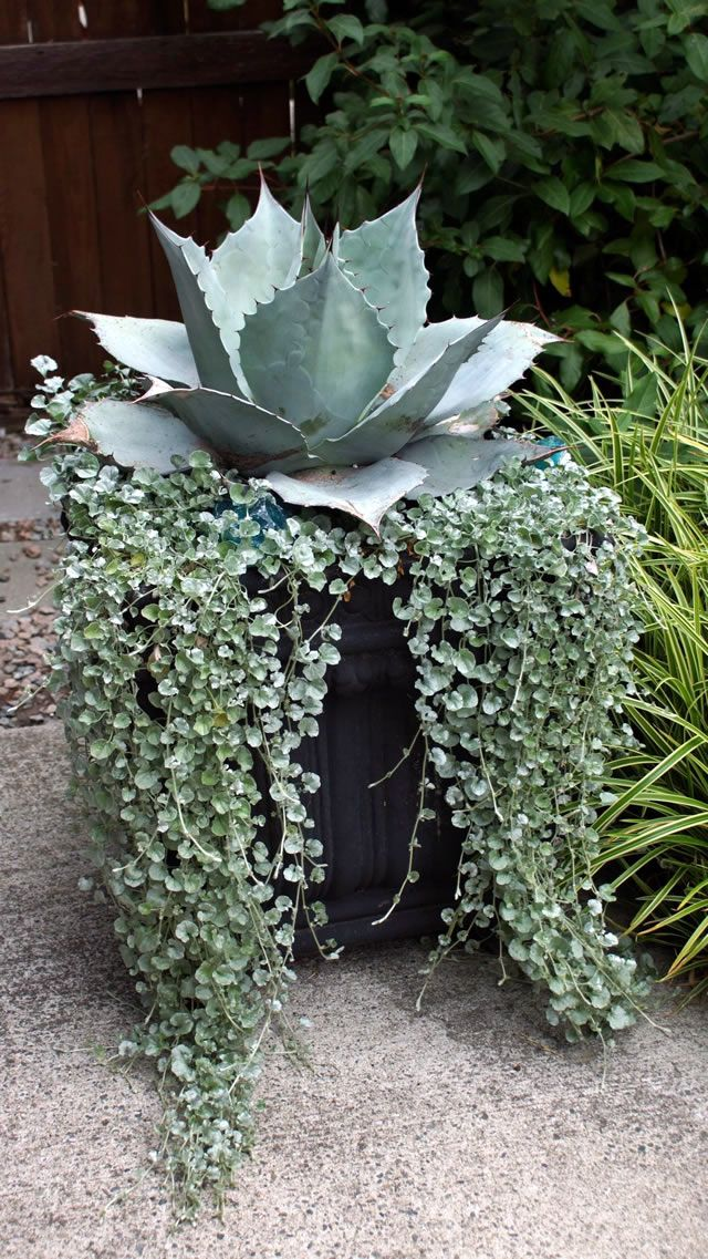 Container Creativity in BC | Fine Gardening