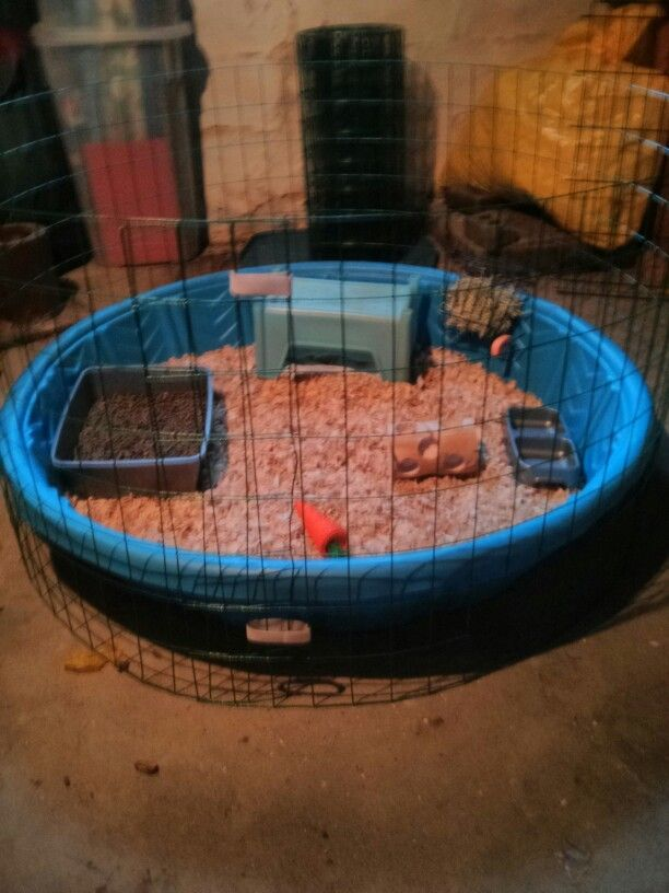 Diy cheap rabbit cage- kiddie pool, rabbit fencing for gardens and velcro
