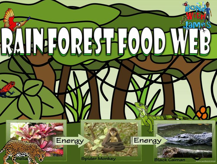 Rainforest food chain and food web card sort #biology