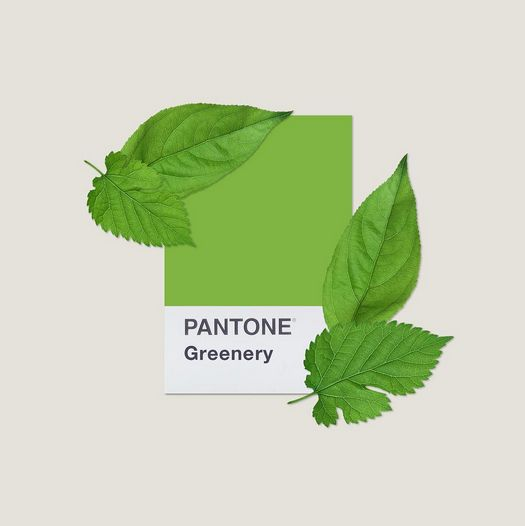 No matter where you are, take a cue from @mydailypantone and connect with nature.  #ColoroftheYear2017 #Greenery