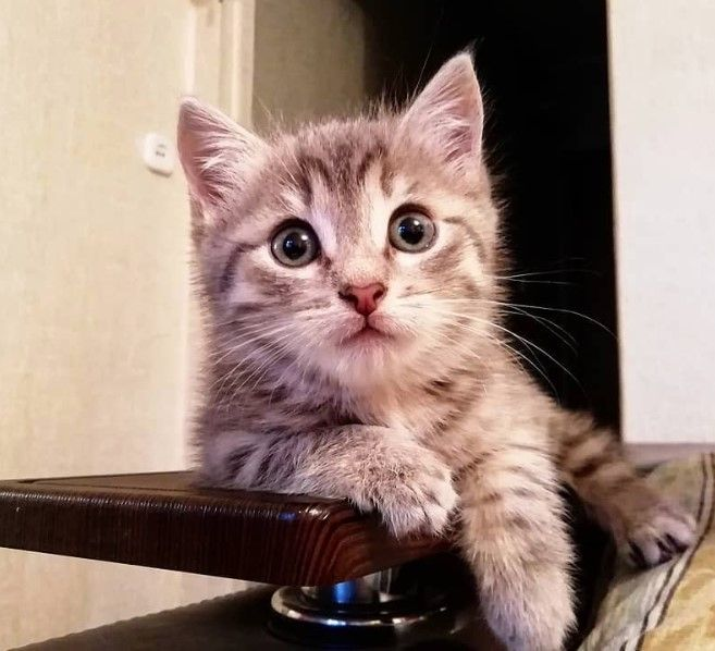250 Cute Boy Cat Names Boy Cat Names Cat Names Boy Cat