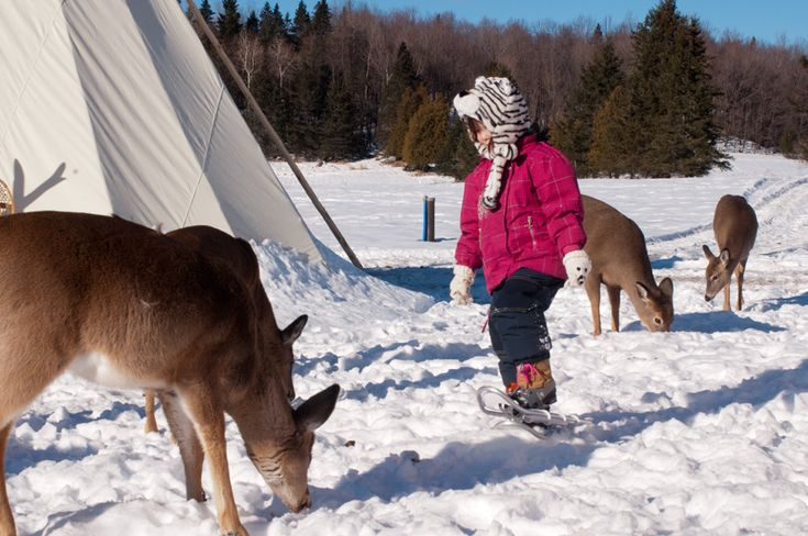 Parc Omega! Best to go in winter when animals are furrier and lively!