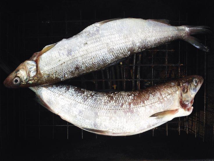 Папина рыбка
