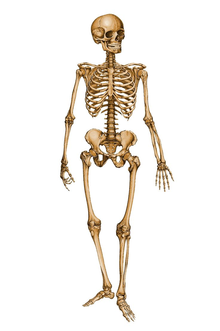 51 Best Esqueletos Images On Pinterest Skeletons Searching And Skulls