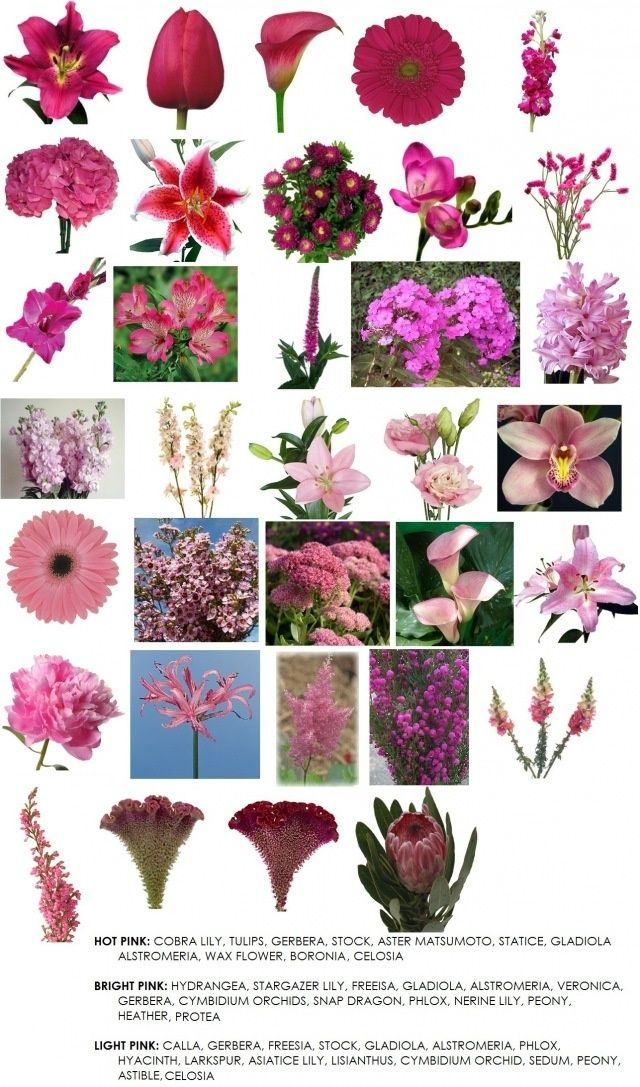 Pink Flowers Flower Names And Pretty Bouquet Pinterest Wedding